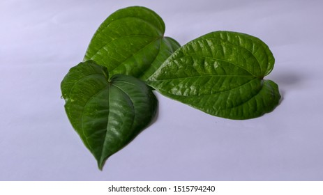 Betel leaf isolated on white background. In Indonesian it called daun sirih. Betel leaf can be use as medicine for some health issue, body fragrance also use as pesticide.