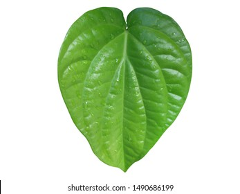 Betel leaves isolated on a white background