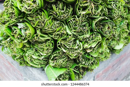Betel leaves, Piper betle, on sale for medicinal use and as mild stimulant in Kathmandu, Nepal.