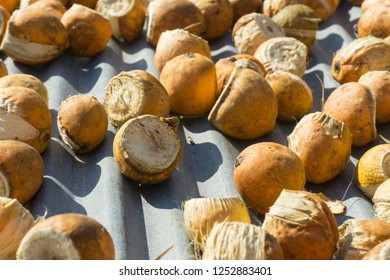 Betel Nut or Areca Nut background,Betel Nut with side shadow.