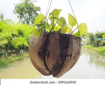 Betel nut tree decorate