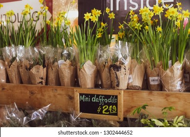 Bethesda, MD / USA - February 2, 2019: Daffodils are for sale at Trader Joe's grocery store chain off of Wisconsin Avenue.