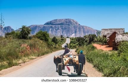 Betsileo people on zebu-powered carts on National Route 7 between Ambalavao and Isalo, Madagascar