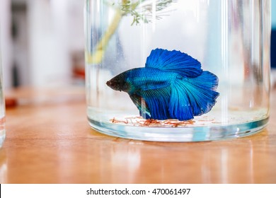 betta fish in the jar