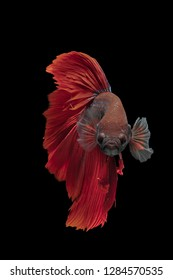 Betta fish typically live in warm water (75 degrees Fahrenheit or warmer), and can be fed a diet of betta fish pellets and frozen food including brine shrimp, bloodworms and daphnia.