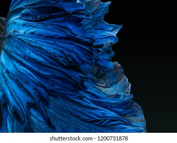 Betta Siamese fighting fish, Betta splendens , popular aquarium fish. Super blue glossy half moon long tail Betta Fighting motion face isolated on white