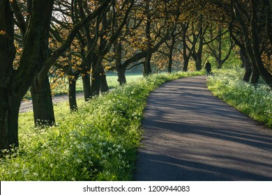 Betuwe, Gelderland, the Netherlands - May 3, 2018 : Pedestrian path in the Betuwe in and early morning in spring