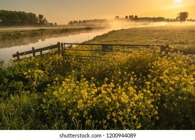 Betuwe, Gelderland, the Netherlands - May 3, 2018 : Yellow wild flowers in a grass field crossed by a misty river in the Betuwe on an early morning in spring