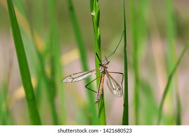 between grass blades in the meadow sits a gnat