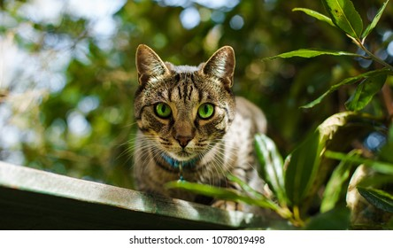 Beutiful cat with gorgeous green eyes in a summer garden in Auckland, New Zealand