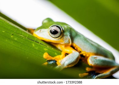 Beutiful exotic frog
