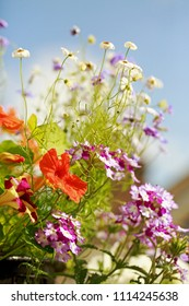 A beutiful spray of colourful summer flowers against a natural blue sky background