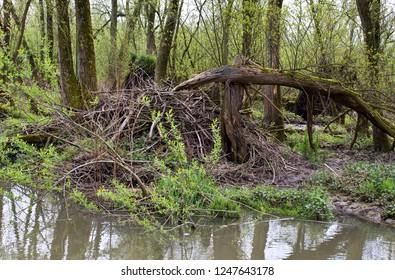 Beverburcht Biesbosch; Beaver Castle Biesbosch