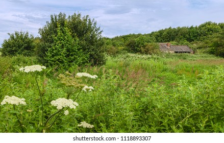 Beverley, Yorkshire, UK. Abandoned barn surrounded by overgrown vegetation and flanked by trees in summer foliage, Beverley, Yorkshire, UK.