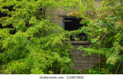 Beverley, Yorkshire, UK. Abandoned farm building shrouded in overgrown wild plant with broken window in rural Beverley, Yorkshire, UK.