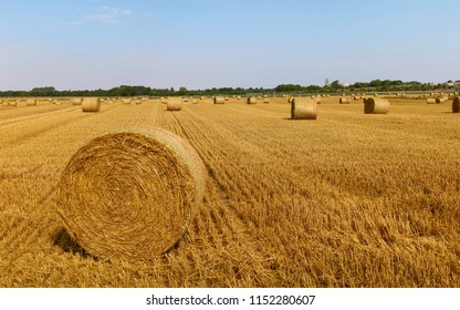 Beverley, Yorkshire, UK. Bales of hay after reaping wheat field on a summer morning during a heat wave in rural Beverley, Yorkshire, UK.
