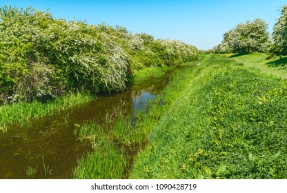 Beverley, Yorkshire, UK. Beverley & Barmston drain flanked by thick flowering vegetation on a bright sunny spring morning near Beverley, Yorkshire, UK.