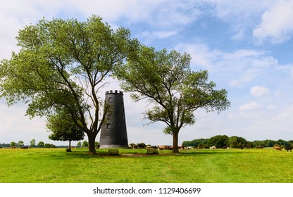 Beverley, Yorkshire, UK. The Black Mill, popular landmark, flanked by tress and cattle grazing on a bright, sunny, summer morning, Beverley, Yorkshire, UK.