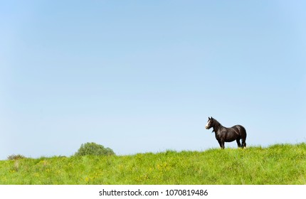 Beverley, Yorkshire, UK. Cob horse grazing along the bank of the river Hull along a grassy verge on a fine summer morning near Beverley, Yorkshire, UK.