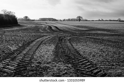 Beverley, Yorkshire, UK. Moody rural scene with ploughed field and oak tree on horizon at dawn in Beverley, Yorkshire, UK.