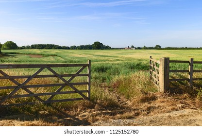 Beverley, Yorkshire, UK. Open farm gate leading into agricultural landscape with grain crop ripening in summer in Beverley, Yorkshire, UK.