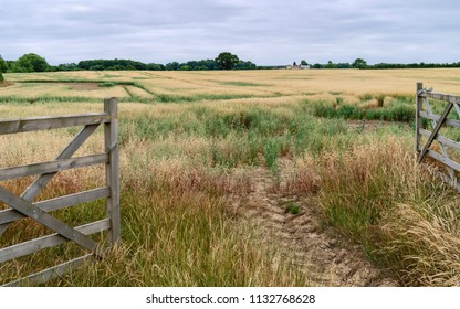 Beverley, Yorkshire, UK. Open farm gate leading into field of oats during dry spell in summer in Beverley, Yorkshire, UK.