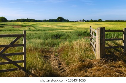 Beverley, Yorkshire, UK. Open farm gate leading into agricultural landscape with oats crop ripening in summer in Beverley, Yorkshire, UK.