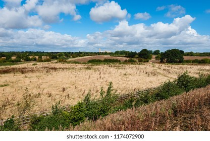Beverley, Yorkshire, UK. Beverley Parklands dominated by tall grasses and flora with minster on the horizon under blue sky in summer, Beverley, Yorkshire, UKI>
