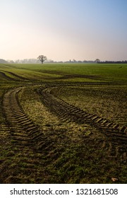 Beverley, Yorkshire, UK. View across agricultural landscape of oats and wheat with tractor tracks on fine misty spring morning under blue sky in Beverley, Yorkshire, UK.