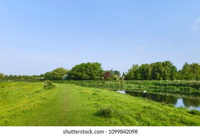Beverley, Yorkshire, UK. View along the river Hull flanked by grass verges, buttercups, trees and a swan on a fine spring morning near Beverley, Yorkshire, UK.
