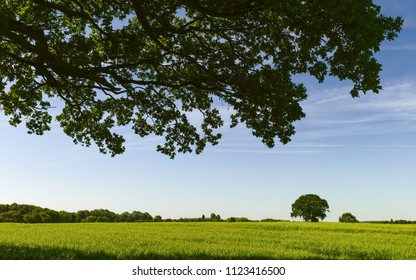 Beverley, Yorkshire, UK. View from under an old oak tree looking across an agricultural landscape on a bright summer morning, Beverley, Yorkshire, UK.
