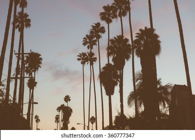 Beverly hills palms silhouette. Concept about California and travels