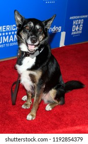 BEVERLY HILLS - SEP 29: Dog Ruby at the 2018 American Humane Hero Dog Awards at The Beverly Hilton Hotel on September 29, 2018 in Beverly Hills, California