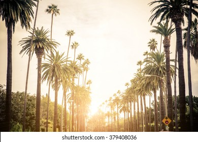 Beverly Hills street with palm trees at sunset, Los Angeles