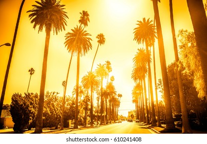 Beverly Hills street with palm trees on both sides, California