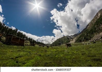 Beyal Camp (Altitude: 3550 m), Nanga Parbat Base Camp Track, Pakistan. Standing in the background, the mighty Nanga Parbat (8126 m).