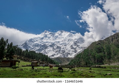 Beyal Camp (Altitude: 3550 m), Nanga Parbat Base Camp Track, Pakistan. Pure wilderness and un-spoiled nature. Standing in the background, the mighty Nanga Parbat (8126 m).