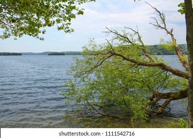 Beyond a fallen tree lies in a beautiful lake with islands and forested shores