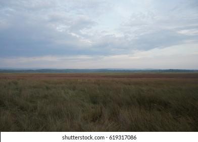 Beyond The Wetlands