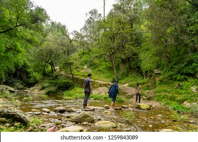 Forests India Stock Photos, Images & Photography | Shutterstock