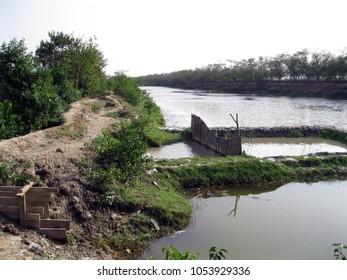 Bheri - A farm where farmers cultivate prawn and shrimp in Sundarbans, West Bengal, India.