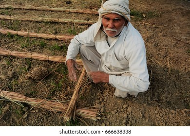 BHIWANI, HARYANA - 23 DECEMBER 2015: An old Indian farmer working in the field of a village in Haryana