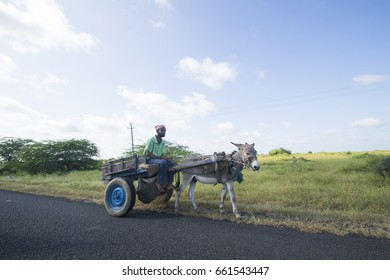 BHUJ, GUJARAT, INDIA, 05 NOVEMBER 2015 : Unidentified Indian farmers with bull cart in his farm, An Indian farming scene.