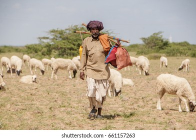 BHUJ, GUJARAT, INDIA, 08 OCTOBER 2015 :unidentified shepherd with sheep and goats, traveling to various part of Gujarat region.