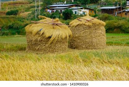 Bhutan, Punakha, two straw heaps in a rice fields near Punakha in autumn. October 2018