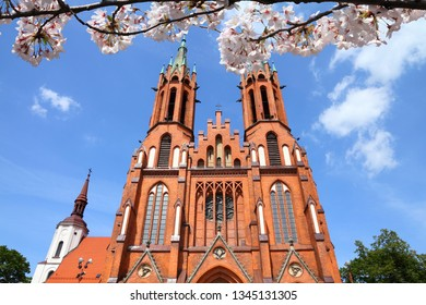 Bialystok city, Poland. Spring time cherry blossoms.