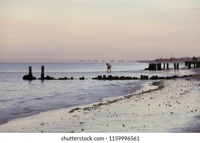 Bibione (Italy) - July 16th 2018: Early morning view of the beach  in Bibione, a town on the Adriatic A person in the background is fishing out scallops