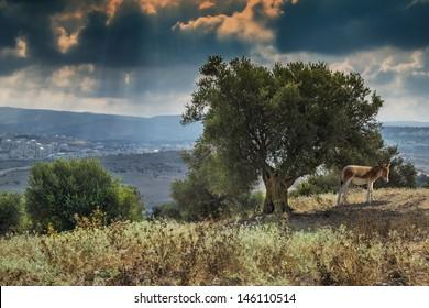 Biblical view on the judaical hills near Jerusalem, Israel
