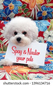 Bichon Frise. Bichon Frise dog with a Hawaiian pattern background. Pet Portrait. Spay and Neuter your pets sign.