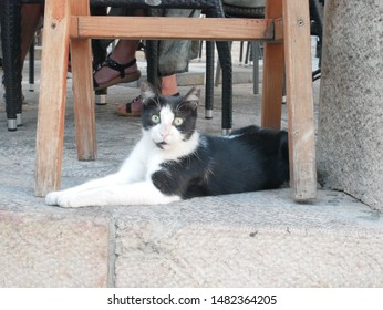 Bicolor Cat sitting under a chair (Stray cat)